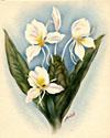 vintage hawaiian floral prints