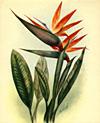 vintage hawaiian artists