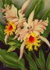 Hawaii tropical art